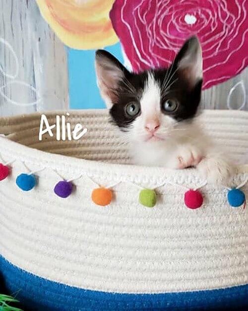 Allie the kitty