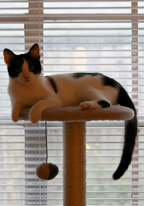 ivy on her cat tree