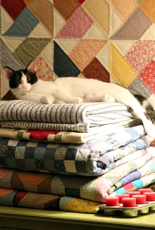 Ivy on a stack of my quilts