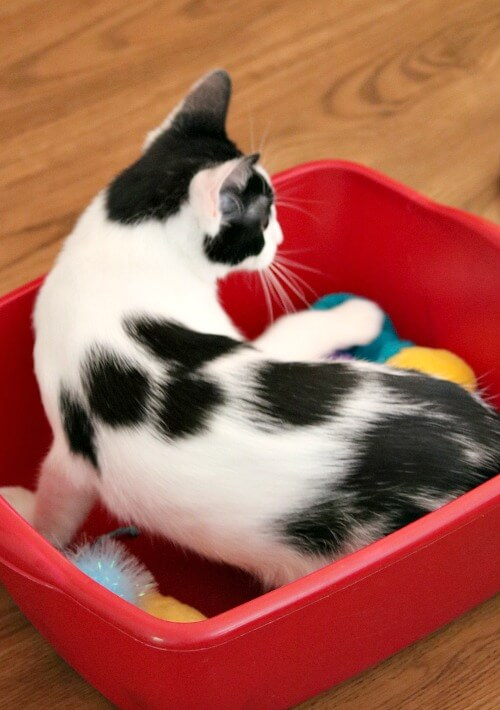 Ivy in her toy box