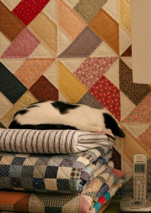 Ivy on stack of quilts