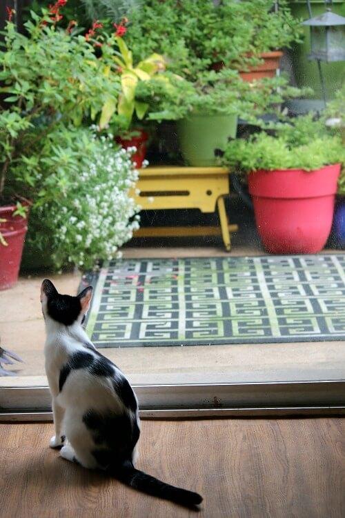 Ivy at the patio door