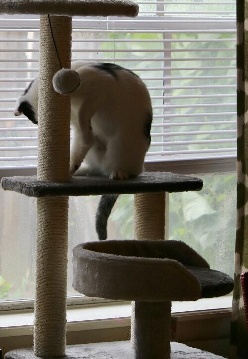 Ivy on the cat tree