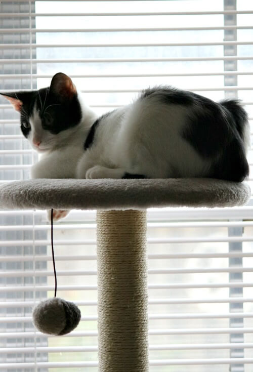 Ivy on top of her cat tree