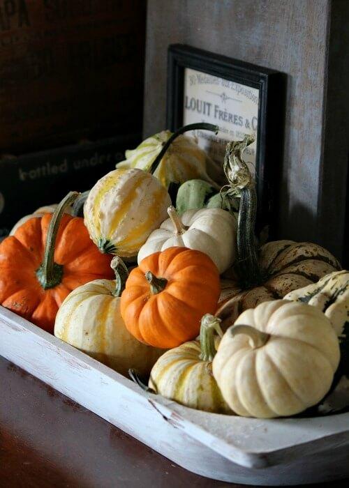 Pumpkins and gourds vignette