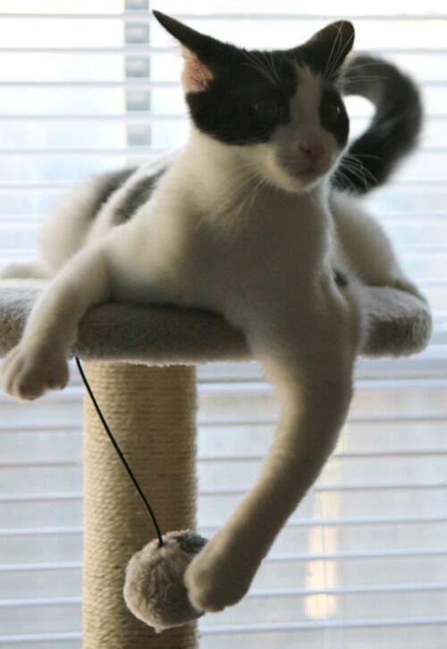 Ivy on her cat tree