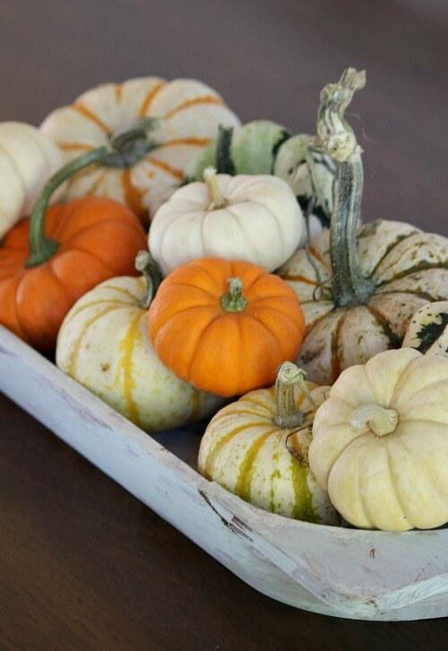 Fall mini pumpkins and gourds as centerpiece