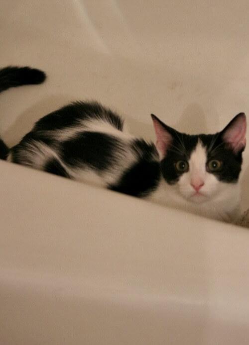 Ivy in the bathtub