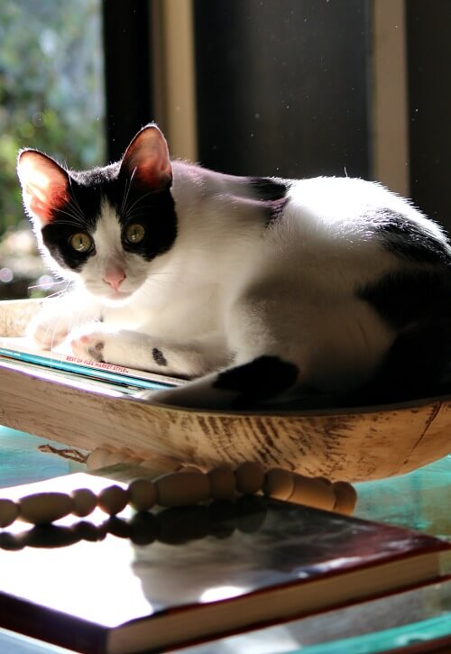 Ivy in the dough bowl of magazines