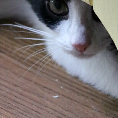 ivy my kitty