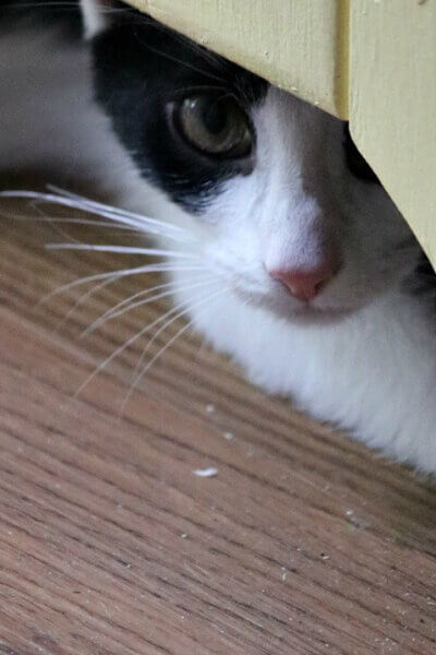 Meet Ivy