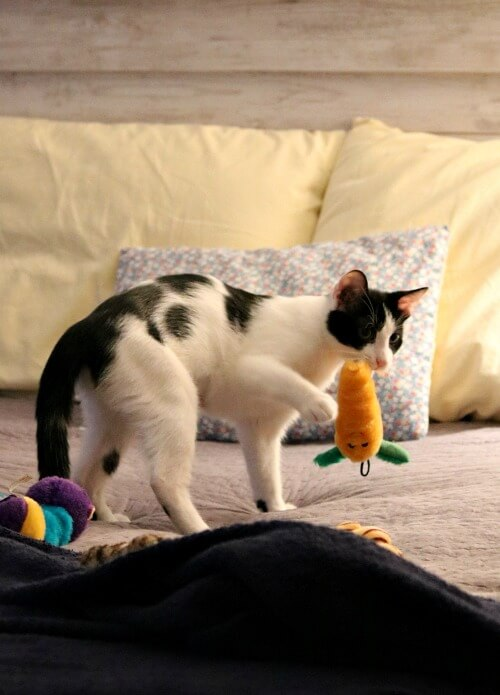 Ivy with toys