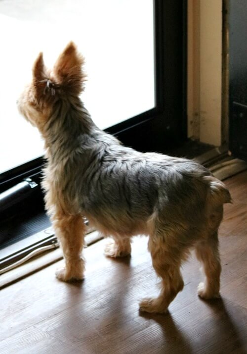 Charlie at the storm door