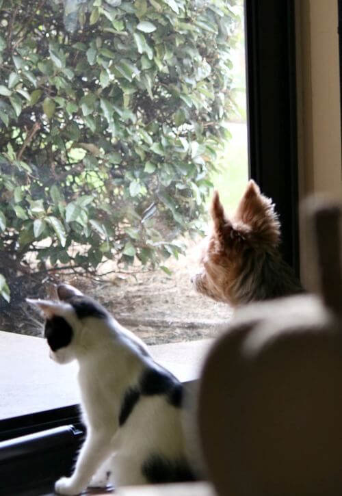 Charlie and Ivy looking out the storm door