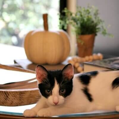 Ivy on coffee table