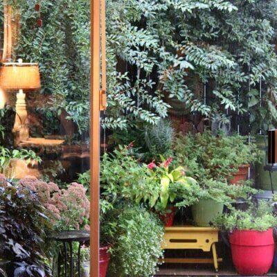 Patio Plants & Pet Babies