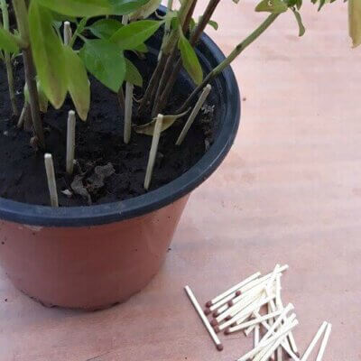 Tips For Sickly House Plants