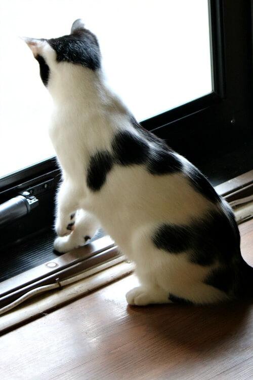 Ivy at the storm door