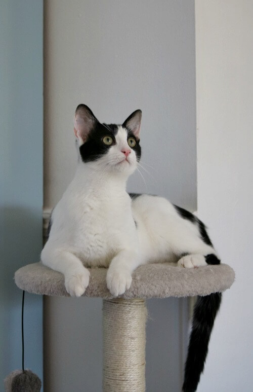 Ivy on cat tree