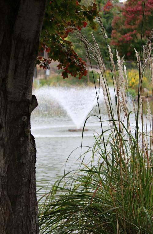 Swan Lake Tulsa
