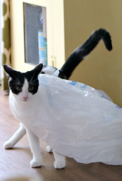 Ivy with plastic sack
