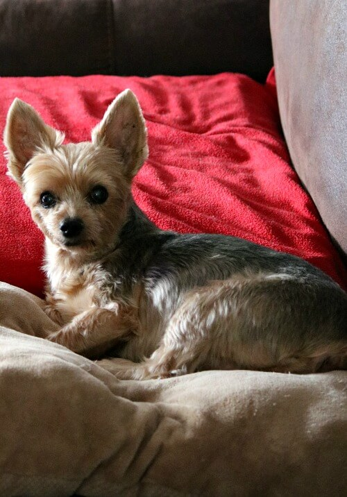 Charlie on the couch