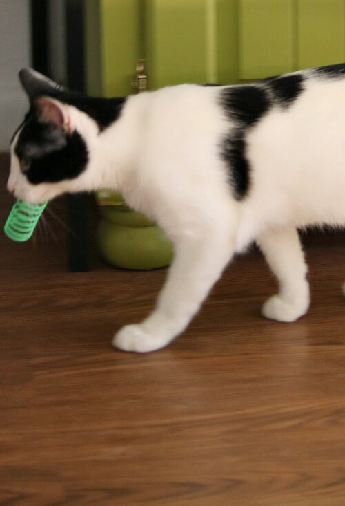 Ivy with cat toy