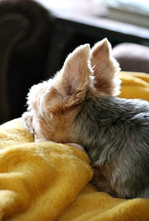 Charlie on a blanket