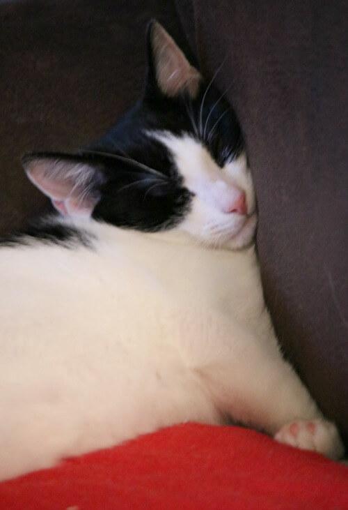 Ivy sleeping