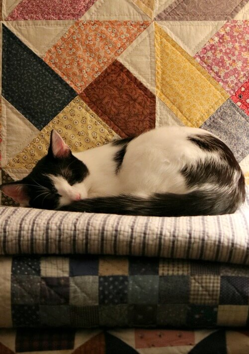 Ivy sleeping on quilts