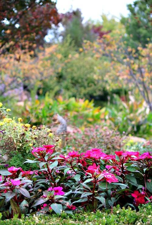 Woodward Park garden