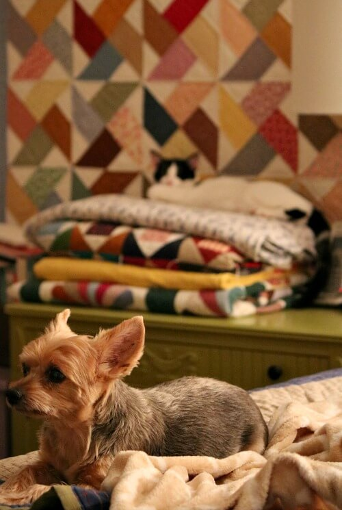 Ivy on quilt stack and Charlie on bed