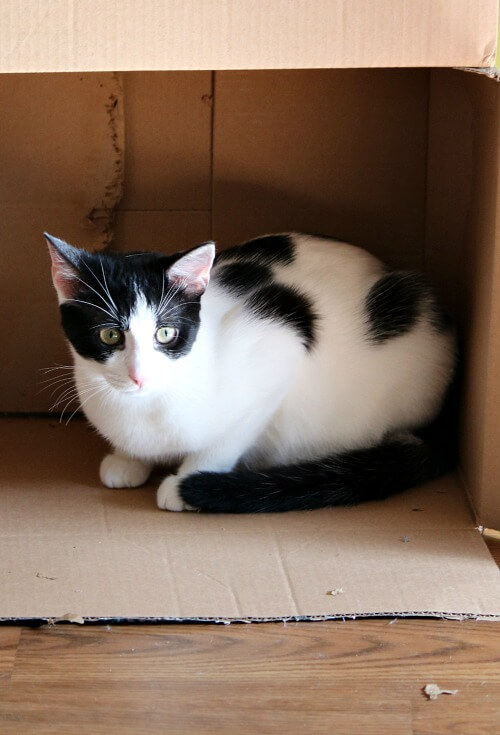 Ivy in box