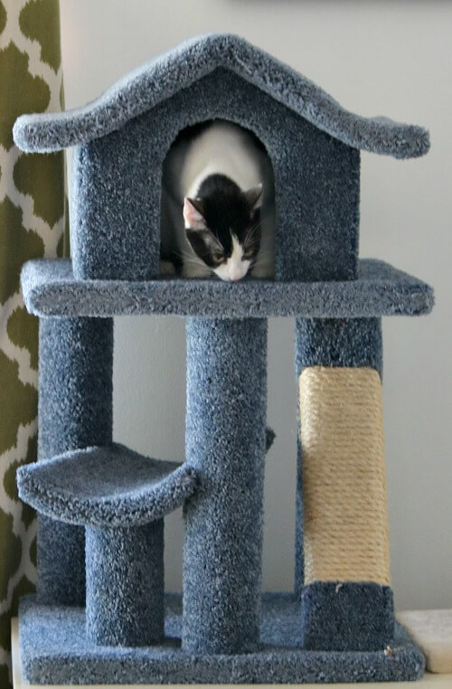 Ivy and her cat condo