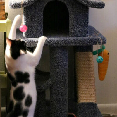 Ivy's Disinterest In Her New Cat Tree & The Injection Yesterday