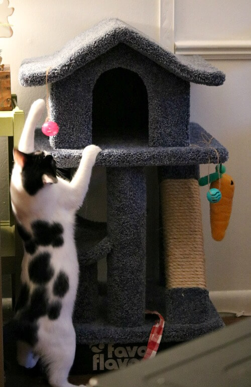 Ivy and cat tree