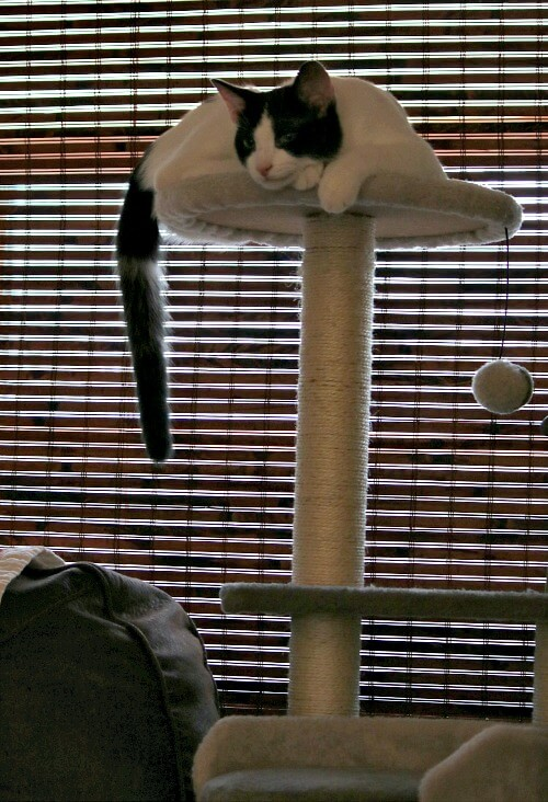 Ivy on cat tree