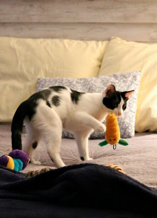 Ivy with a toy