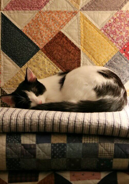Ivy asleep on quilt stack