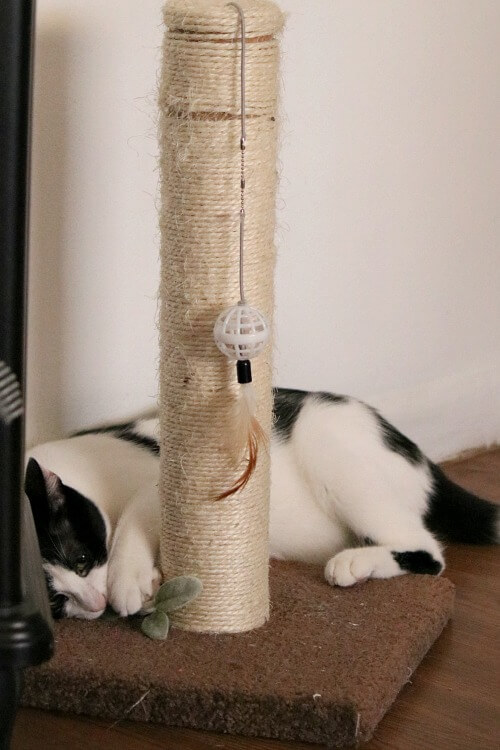 Ivy and scratching post
