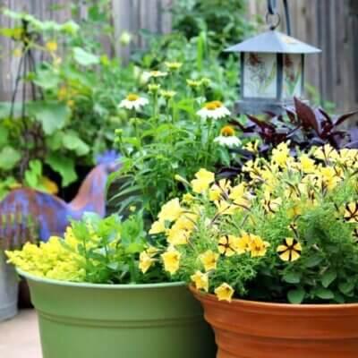 Gardening, What I'm Reading & Social Media