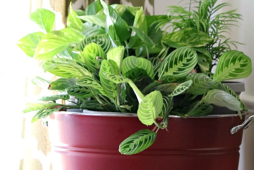 House plants inside a red beverage tub