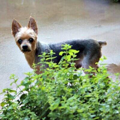 Charlie Is Doing Better & My Pepper Plant