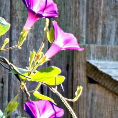 Seeds Emerging & Garden Work