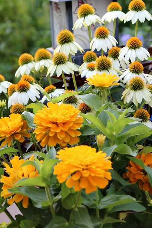 The Stifling Heat & My Garden