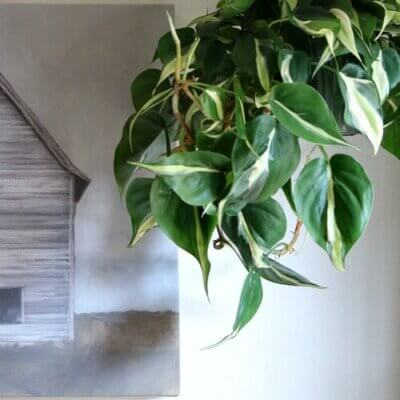 """House Plants, Ivy, Charlie's Therapy & """"Wanted"""""""