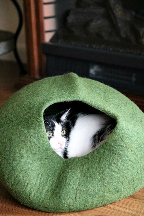 Ivy's New Cat Cave