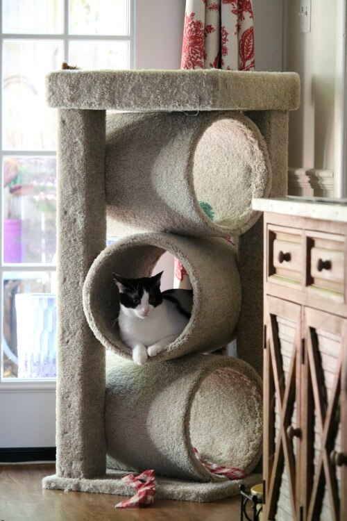 Ivy's Cat Tower Arrives