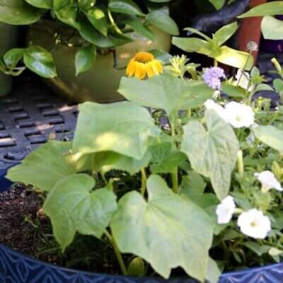 Little Garden Surprises