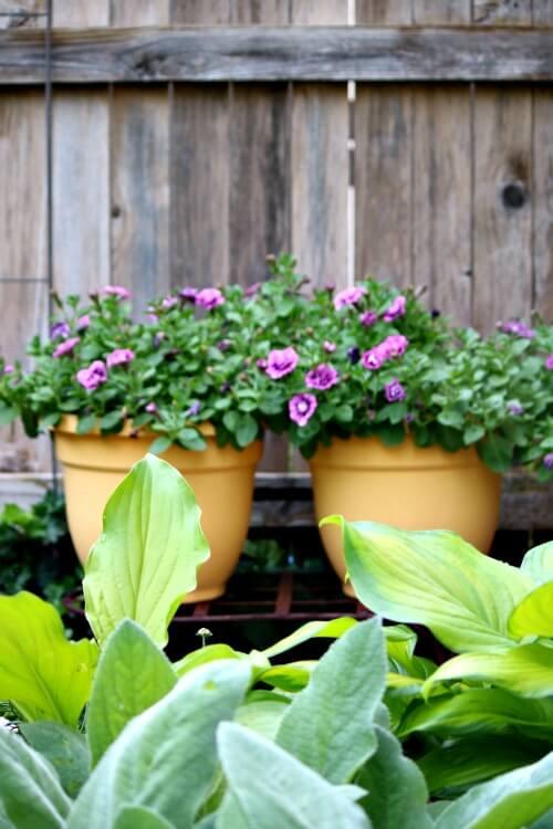 Best Plant Caddies To Buy